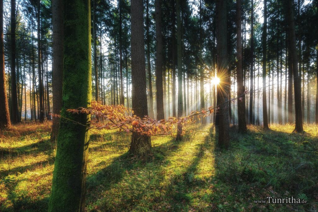 Wald in der Nähe von Bremen